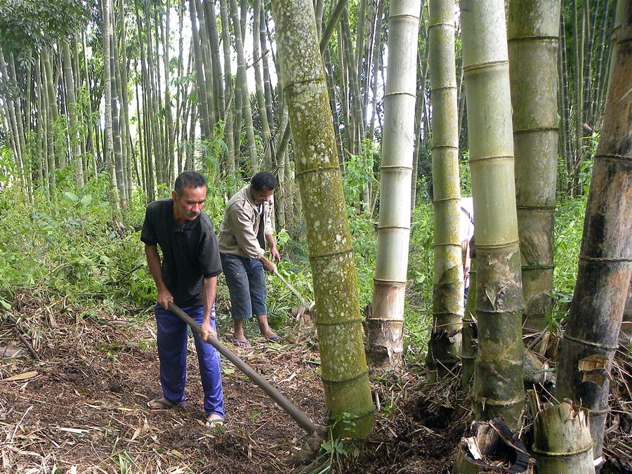 Bamboo: The Secret Weapon in Forest and Landscape Restoration?
