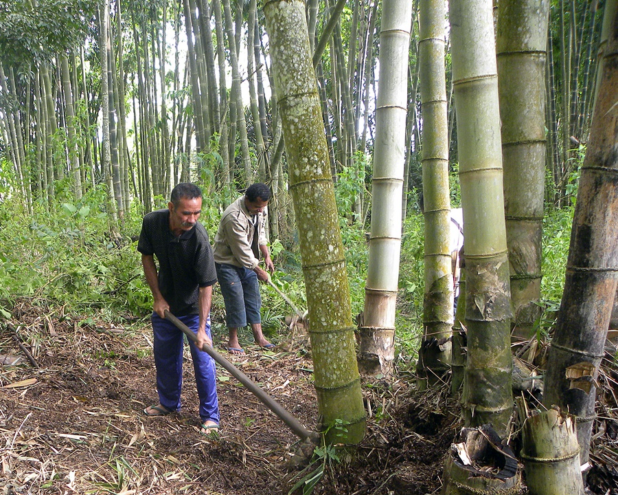 bamboo-forestry