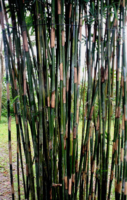 Bamboo Industry