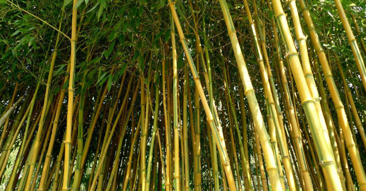 Why Use Bamboo?