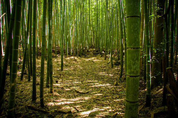 bamboo-soil