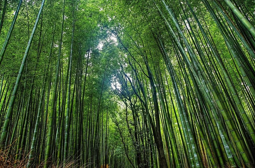 The story of National Bamboo Mission