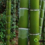 Container Bamboo
