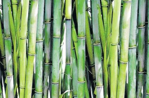 Characteristics of Bamboo – A Highly Sustainable Material