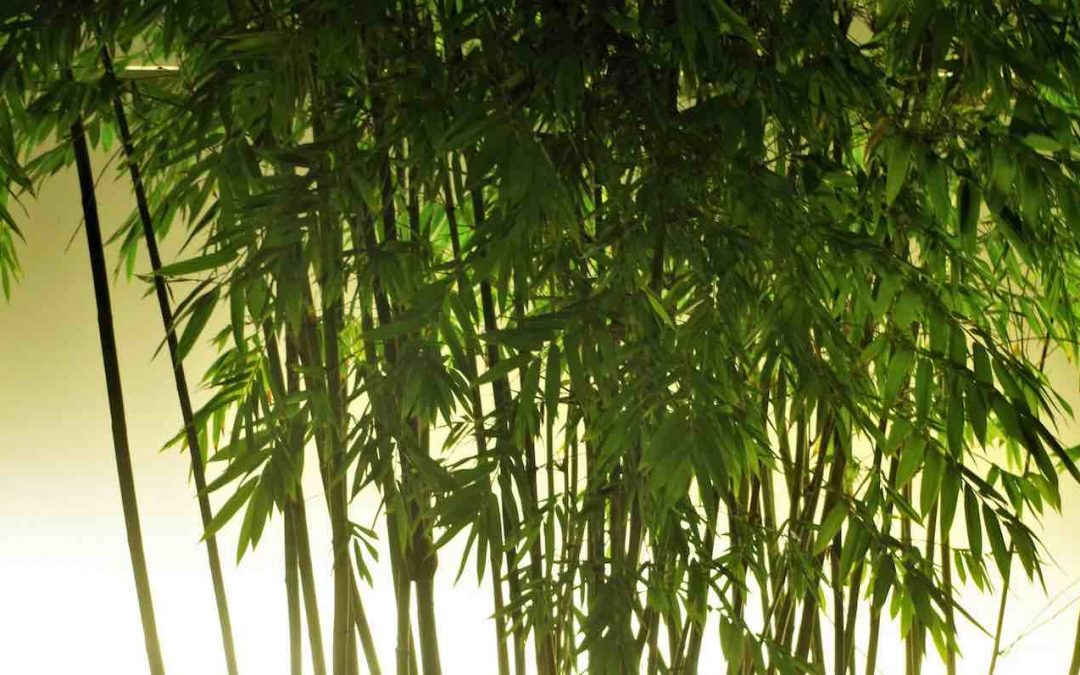 Pros And Cons Of Planting Bamboo In Gardens