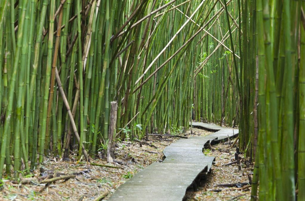 BAMBOO GROWS ANYWHERE……. The Importance of Site-Species Selection for Bamboo