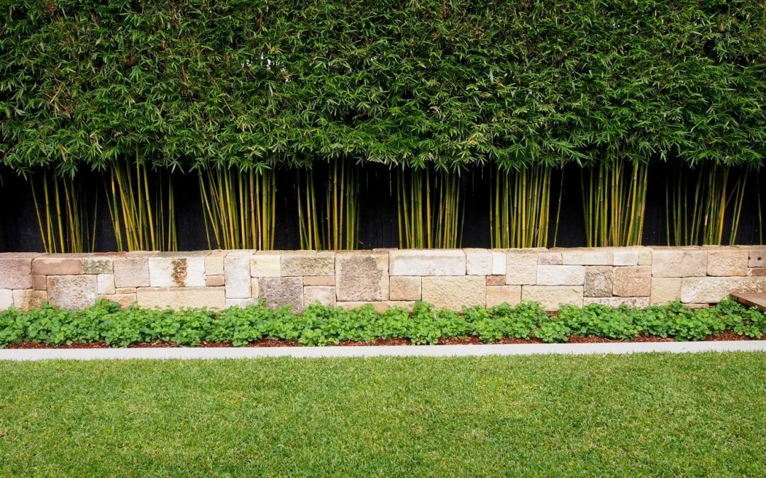 How To Create Your Own Bamboo Hedge