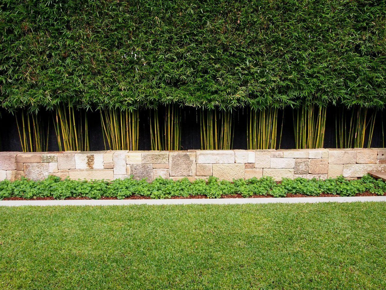 bamboo-hedge