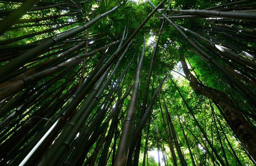 bamboo-water