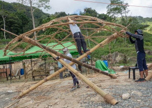 bamboo-strength